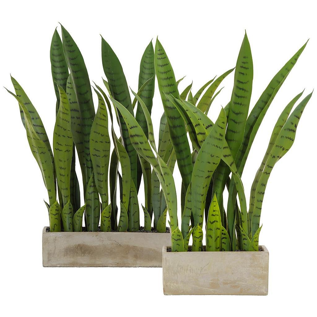 Rostlina Umělá Vitus