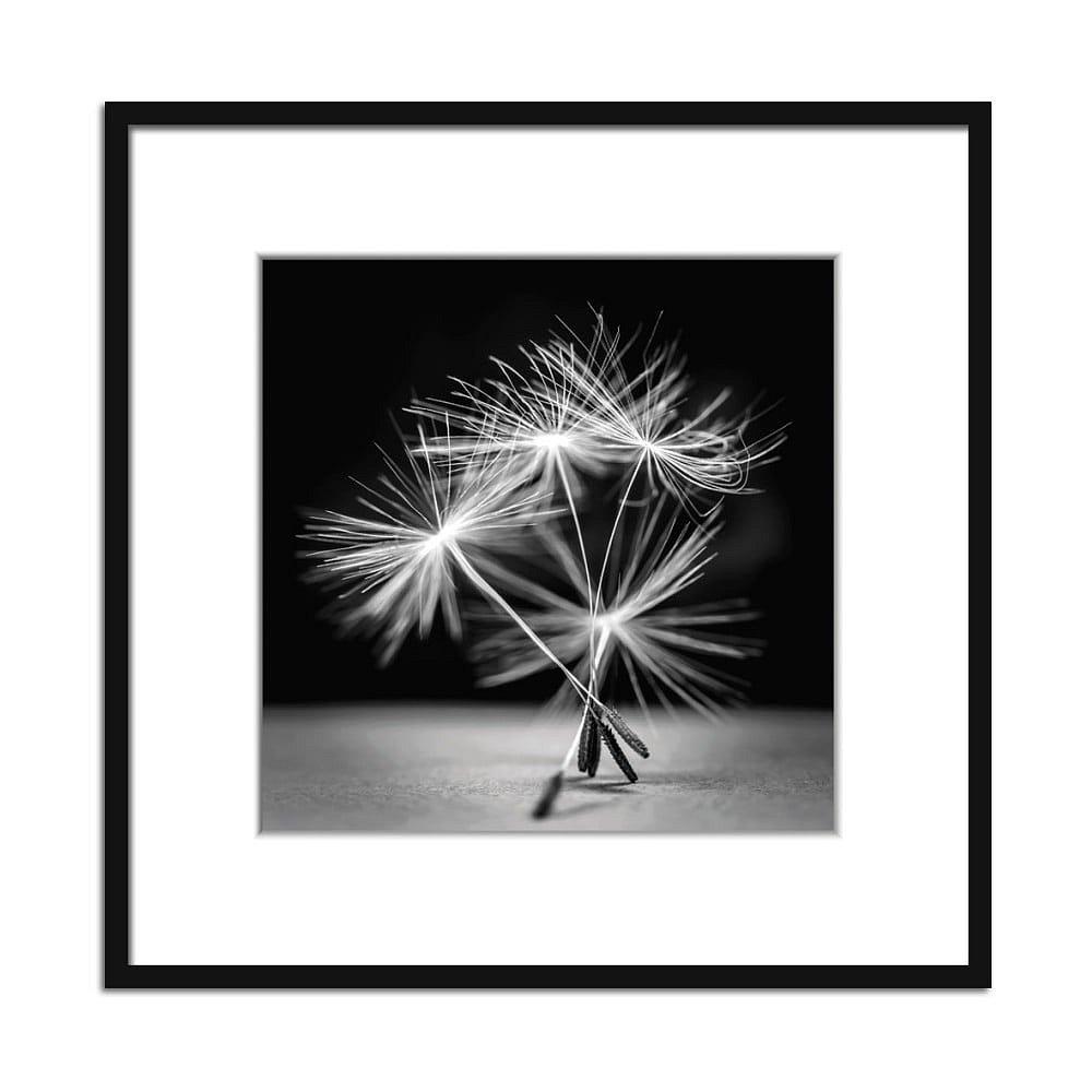 Obraz Styler Artbox Dandel I, 50 x 50 cm