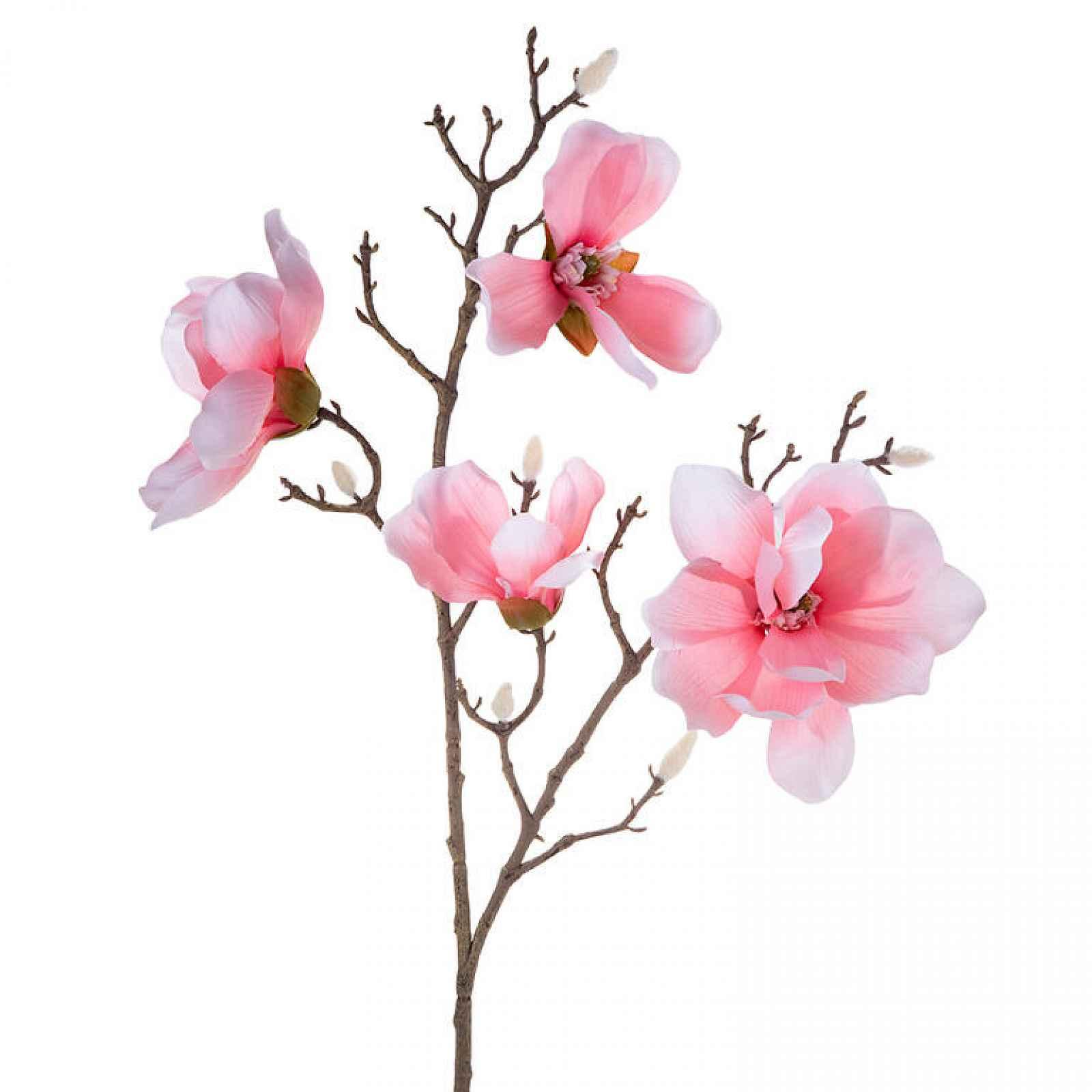 Magnolie větev sv. růžová