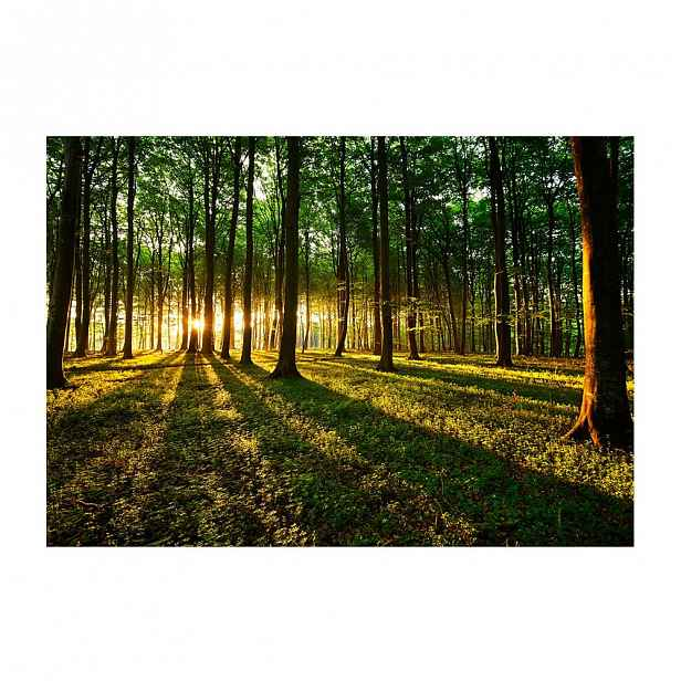 Velkoformátová tapeta Artgeist Spring Morning in the Forest,200x140cm