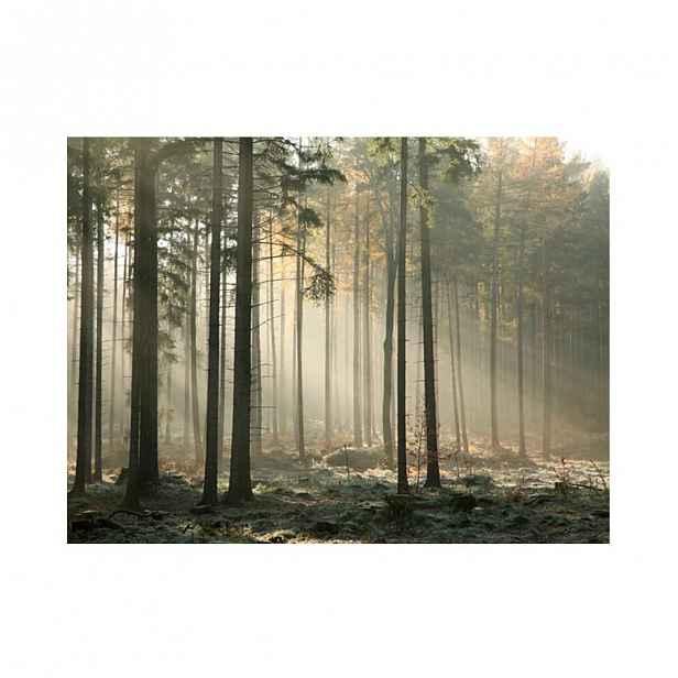 Velkoformátová tapeta Artgeist Foggy November Morning,200x154cm