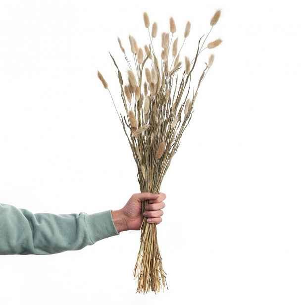 Butlers FLOWER MARKET Sušené kytice tráva Lagurus 70 cm set 2 ks